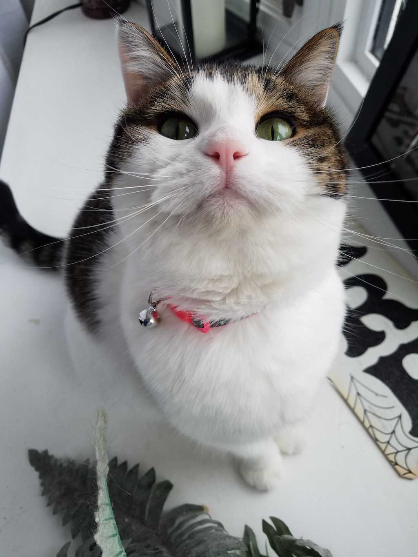 Angel, the cat