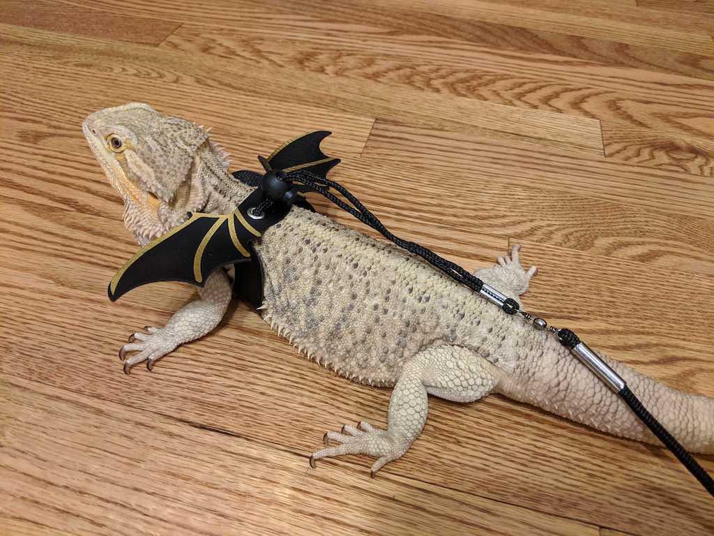 Falkor the dragon