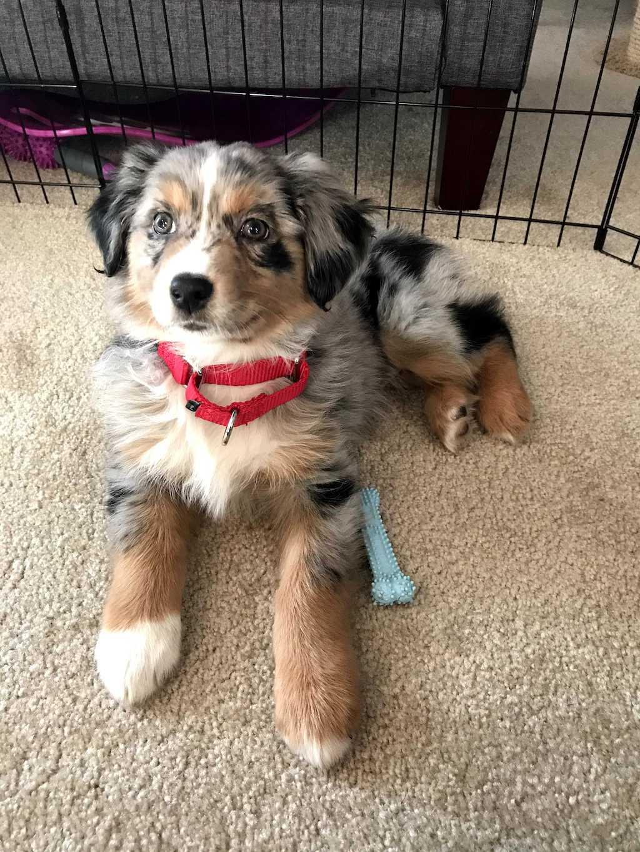 Aspen, a cute dog.